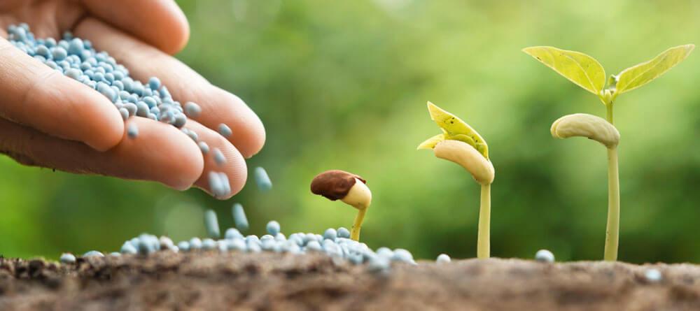 Особенности и разновидности калийной группы удобрений