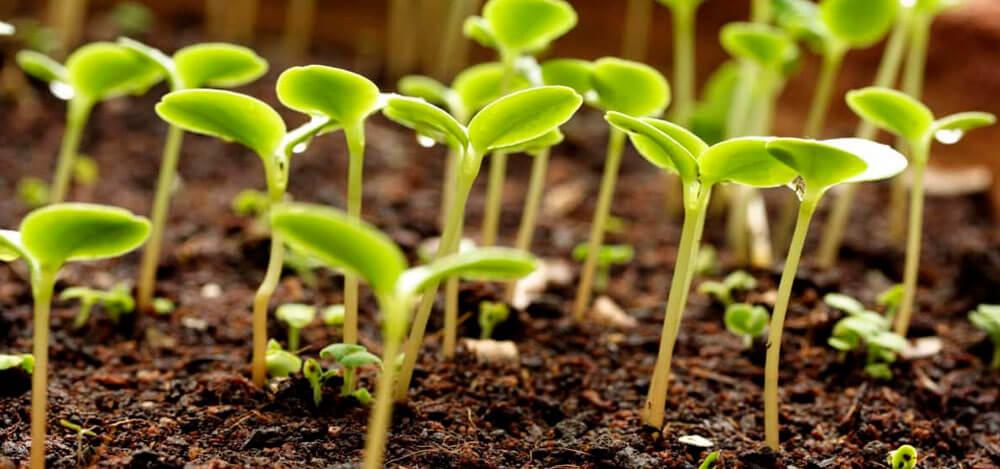 Особенности применения органоминеральных удобрений