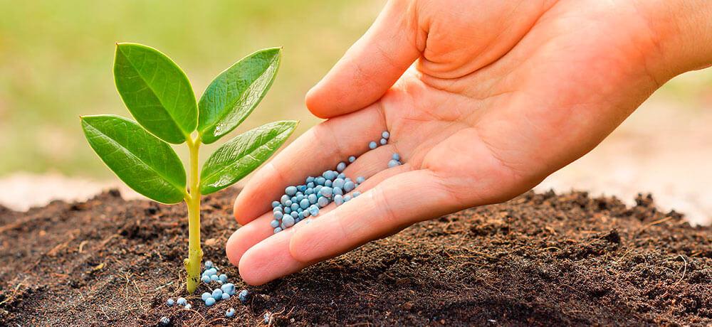 Разновидности азотных удобрений